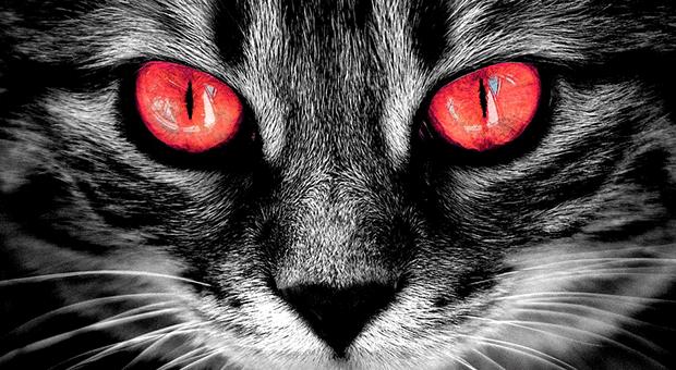 Mitos Menabrak Kucing Bikin Sial