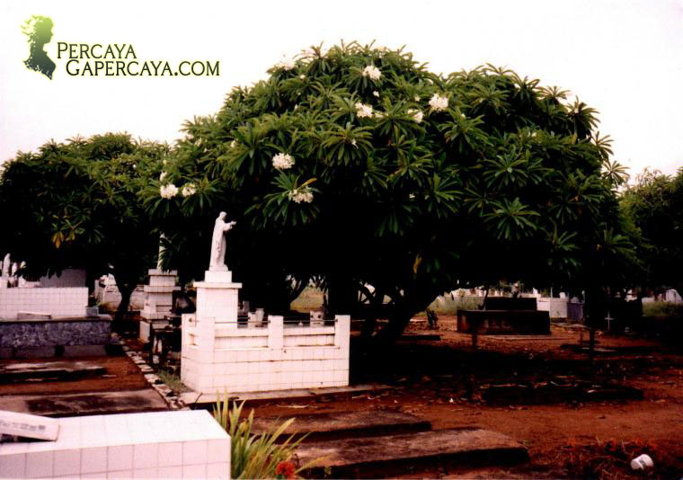 Pohon Kamboja, Pemanggil Hantu?
